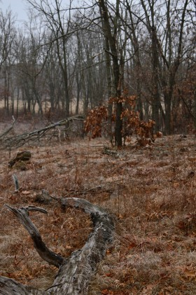 View of the open savanna down slope to the West of downed log.